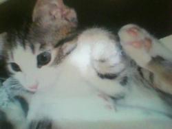 Praline, chat