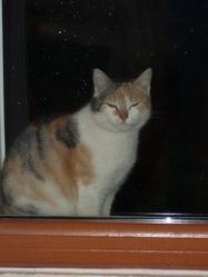 Praline, Nougatine Et Tifi, chat Gouttière