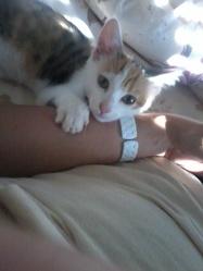 Pralinette, chat