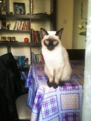 Prince, chat Thaï