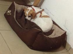 Princess, chien