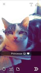 Princesse, chien