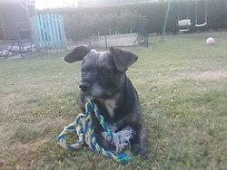Prisca, chien