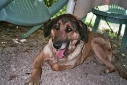 Prisca Décédée, chien Berger allemand
