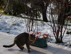 Priska, chat Gouttière