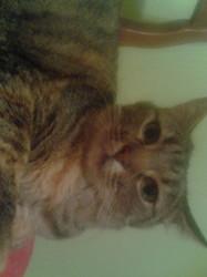 Prunelle, chat Gouttière