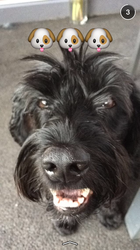 Prunelle, chien