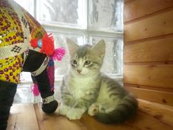 Pti Lou, chat Gouttière