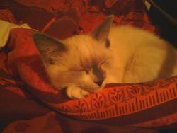 Ptit Loup , chat