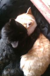 Ptit Nuage, chat Gouttière