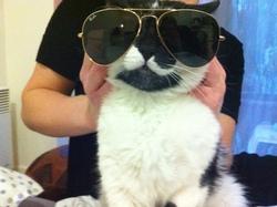 Pucci, chat Gouttière