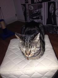 Puff, chat Gouttière