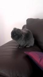 Pumba, rongeur Lapin