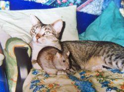 Pumbaa, chat Gouttière