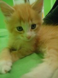 Pumpkin, chat Gouttière