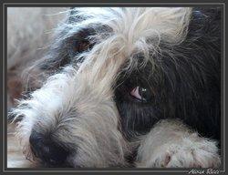 Puncky, chien