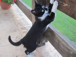 Punkie, chat Gouttière