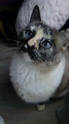 Purdey, chat Gouttière