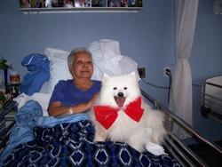 Putchy, chien Samoyède