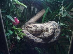 Python, autres