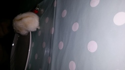 Queen, rongeur Hamster