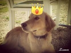 Queen, chien