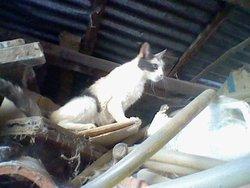 Quicas, chat Gouttière