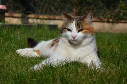 Quiche, chat Gouttière