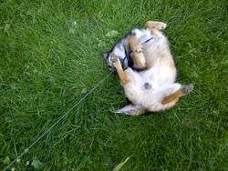 Quincy, chien