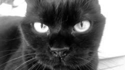 Régina, chat Gouttière