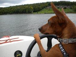 Radar, chien Pinscher