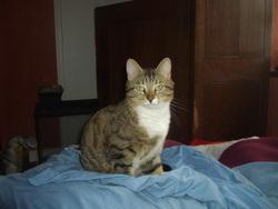 Ragondin, chat Gouttière