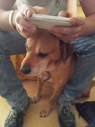 Ralph , chien