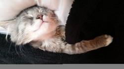 Ralphy, chaton
