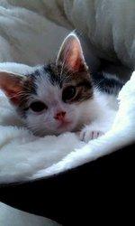 Rambeau, chat
