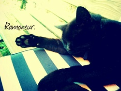 Ramoneur, chat Gouttière