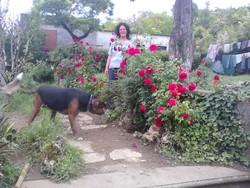 Ramses , chien