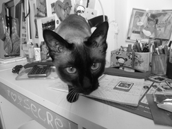 Ramsès, chat Siamois
