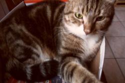 Ramsès, chat
