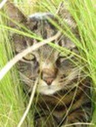 Ramses, chat Gouttière