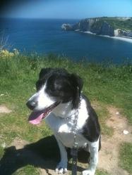 Rani, chien Border Collie