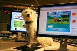 Rantanplan, chien Jack Russell Terrier