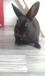 Raoul, rongeur Lapin