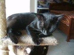 Rapido, chat Gouttière