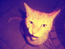 Rawhouéte, chat Gouttière