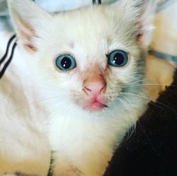 Ray, chaton Gouttière