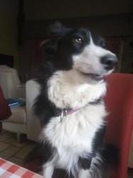 Rayden, chien