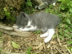 Rebel Adopté, chat Gouttière