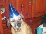 Rebelle, chien Carlin