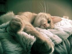 Redford, chat Gouttière